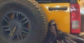 Bán Hummer H3 sản xuất năm 2008, màu vàng, nhập khẩu nguyên chiếc giá 1 tỷ 250 tr tại Cần Thơ