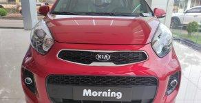 Kia Morning giá chỉ từ 304 triệu tại Kia Bình Phước giá 304 triệu tại Bình Phước